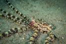 Indonesien (Lembeh Strait, Bangka)_7